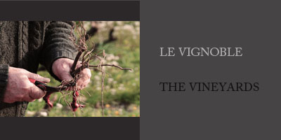 Photos vignoble