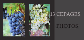 13 CEPAGES album