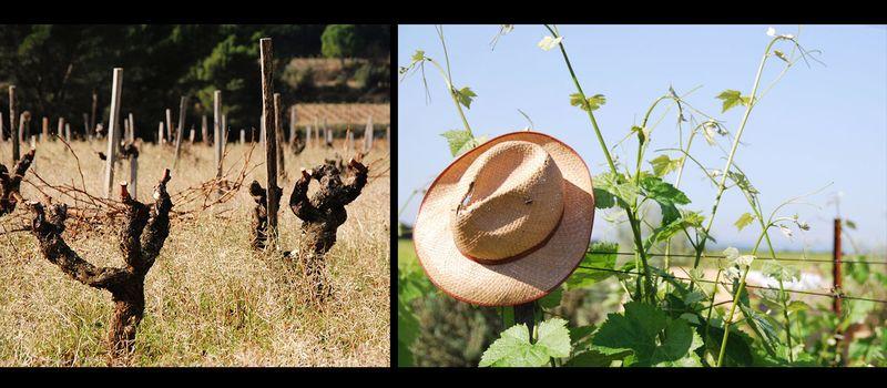 Vignes Banneret