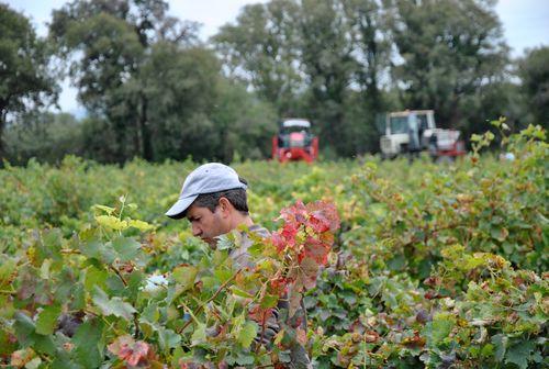 vignes du bois de boursan